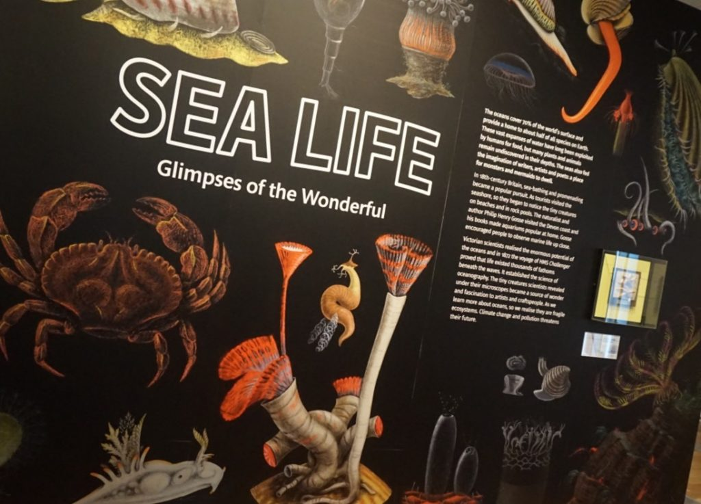 Sea Life: Glimpses of the wonderful
